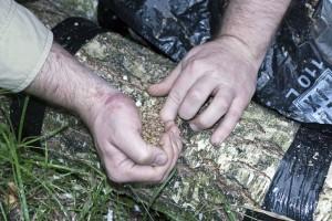 Baumstamm mit Körnerbrut beimpfen