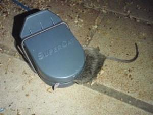 Katz und Maus 2.0
